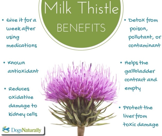 Why Milk Thistle!