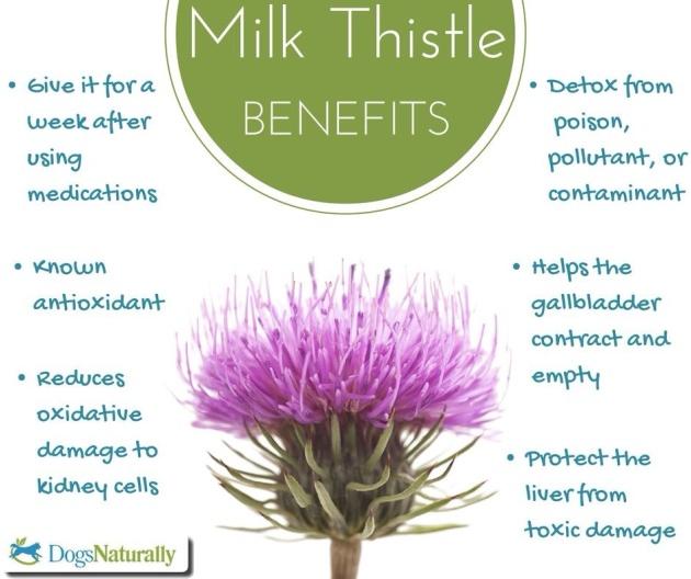 Why Milk Thistle!