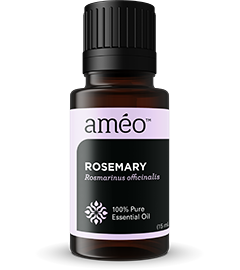 Ameo_Rosemary_thumb_240x270